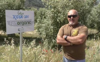 Primeras pruebas exitosas del fertilizante de Fenorganic en olivares de la Sierra Norte de Málaga